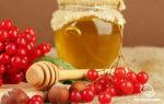 Сок калины: полезные свойства самого многогранного напитка