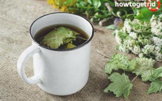 Чай из листьев смородины — польза и вред ароматного настоя