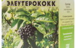 Элеутерококк: полезные свойства и противопоказания, показания к применению, цена и отзывы о препарате