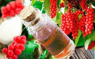 Листья лимонника: заготовка и применение полезного растения