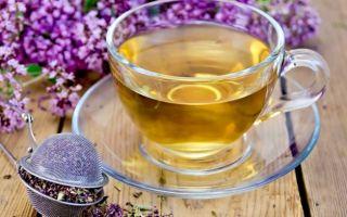 Чай с чабрецом — польза и вред напитка, рецепты приготовления