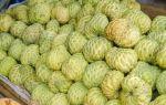 Нони (моринда цитрусолистная): лечебные свойства плодов и листьев