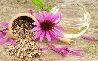 Эхинацея: что это? пользу или вред несет в себе echinacea, химический состав настойки и показания к применению