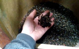 Мертвые пчелы — применение в лечебных целях