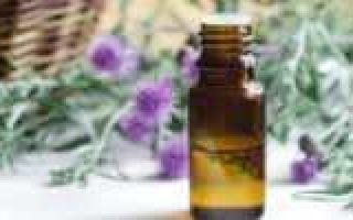 Золотой ус: применение при различных заболеваниях