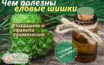 Еловые шишки — настойка на водке для укрепления сосудов