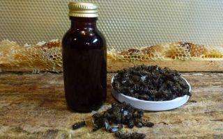 Настойка пчелиного подмора: лечебные свойства и противопоказания, рецепты на водке, на спирту и их применение