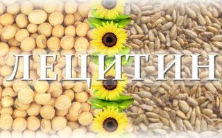 Подсолнечный лецитин: чем он лучше соевого аналога, в чем их разница, где купить качественный продукт
