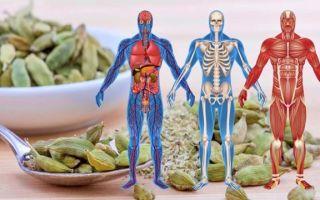 Кардамон – применение в качестве специи и лекарства