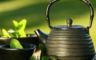 Адиантум: лечебные свойства, способы применения и особенности выращивания