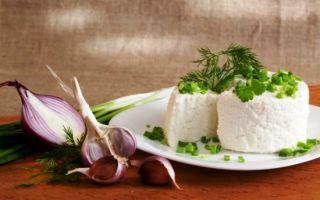 Творог из козьего молока: простые рецепты