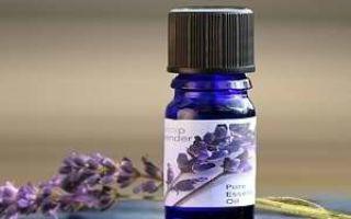 Лаванда: полезные свойства и применение в народной медицине, существуют ли у травы противопоказания
