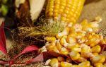 Кукуруза: калорийность и расшифровка витаминно-минерального состава