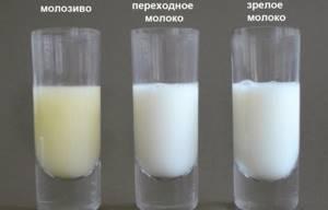 Коровье молозиво: польза и вред для человека, можно ли пить его взрослым людям, чем оно полезно для кожи лица
