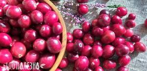 Сушеная клюква - целебные свойства и заготовка