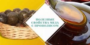 Мед с прополисом: полезные свойства и лечебные качества