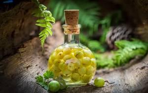 Настойка из крыжовника на водке: готовим спиртное дома