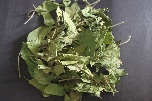 Джимнема: что это такое, как растение помогает в борьбе с диабетом, лекарственное применение экстракта листьев
