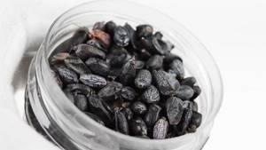 Настойка барбариса: лучшие рецепты натурального лекарства