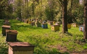 Лесной мед: чем отличается и в чем его польза?
