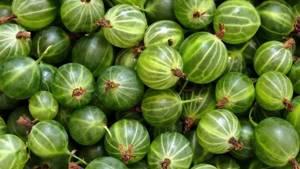 Черный крыжовник – польза для организма и применение в кулинарии