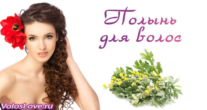 Полынь для волос: рецепты масок и домашних ополаскивателей