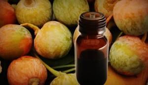 Гинко билоба: лечебные свойства и применение