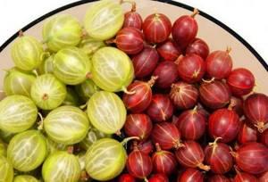Листья крыжовника – полезные свойства и противопоказания зеленых врачей