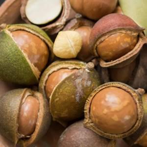 Орех макадамия: многостороннее действие австралийского продукта