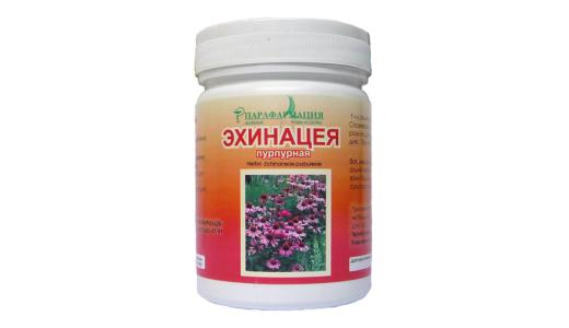Эхинацея: лечебные свойства и противопоказания, польза для организма и возможные побочные действия