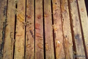 Гречишный мед – натуральный источник витаминов и минералов