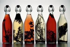 Настойка девясила на водке: применение и руководство по приготовлению