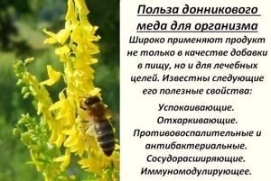 Донниковый мед: есть ли смысл в его приобретении?
