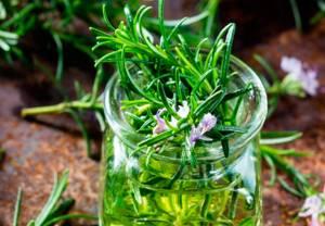 Чай с розмарином - полезные свойства напитка вас приятно удивят