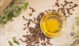 Кедровое масло: лечебные свойства и противопоказания, что полезного оно приносит организму и сколько стоит