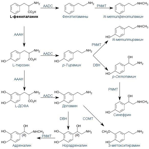Фенилаланин: что это такое, его естественные источники, существующие формы аминокислоты, их польза и вред