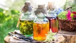 Настойка каланхоэ – натуральное средство для вашего здоровья