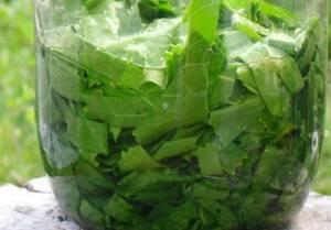 Листья хрена от отложения солей — особенности лечения