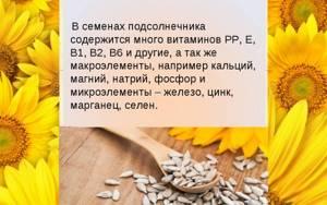 Семечки подсолнечника - польза и вред для нашего организма