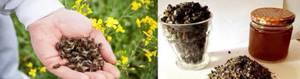 Пчелиный подмор: рецепты для суставов, приготовление настойки для лечения подагры и остеохондроза