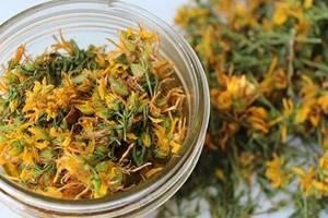 Зверобой: когда собирать и как правильно сушить, заготовка на зиму для приготовления чая в домашних условиях