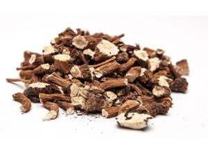 Корень барбариса: лечебные свойства, заготовка и применение