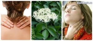 Бузина красная: описание и фото, лечебные свойства и противопоказания, какими полезными свойствами обладают ягоды и цветы