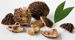 Черный орех от паразитов: отзывы людей, которые проверили его эффективность, как помогает от глистов, что полезного в листьях