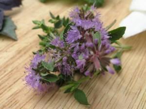 Запах лаванды: с какими проблемами справится аромат растения, боремся против моли, комаров и других насекомых
