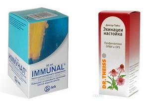 Эхинацея для иммунитета: как правильно пить без вреда для здоровья, для укрепления взрослым и детям