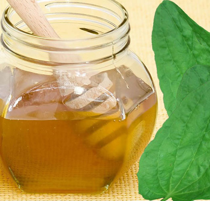 Мед при гастрите — лечение повышенной и пониженной кислотности