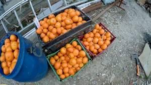 Настойка на мандариновых корках: польза и удовольствие в одном флаконе