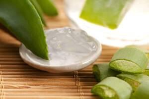 Сок алоэ: приготовление в домашних условиях и лечение
