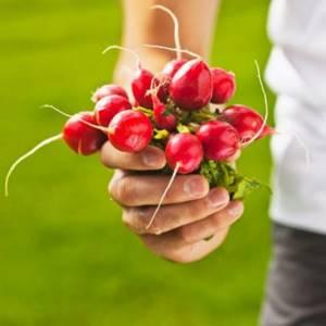 Редиска – о большой пользе маленького корнеплода